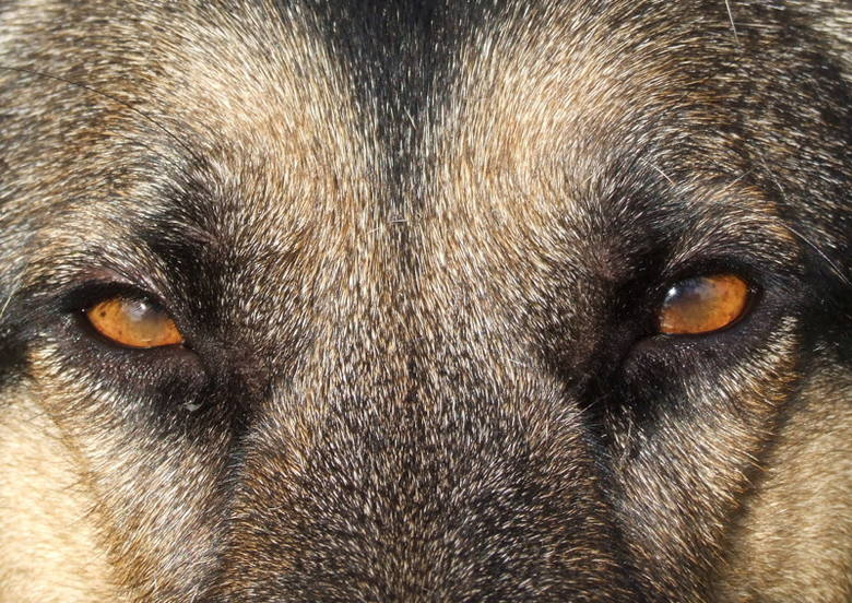 Policyjny pies uratował kobietę przed zamarznięciem