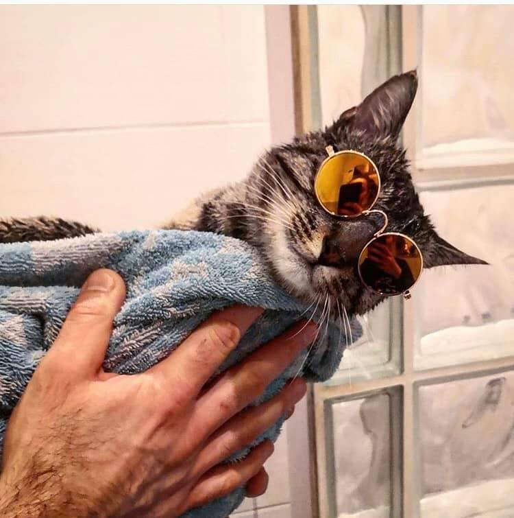 Dziś dzień kota, kilka dni temu poprosiliśmy naszych czytelników o przesłanie zdjęć ich ulubieńców. Wybraliśmy te, które na Facebooku zyskały największą