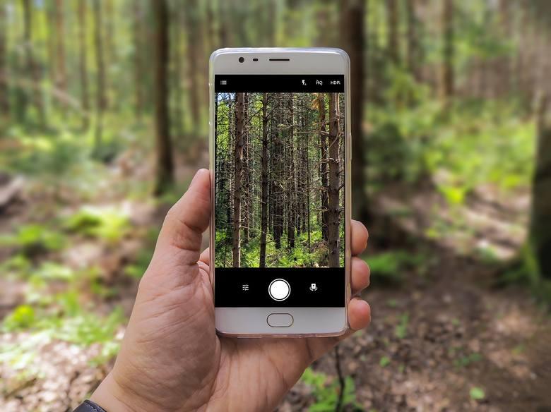 Powstała aplikacja z mapami lasów. To bank danych, jakiego jeszcze nie było