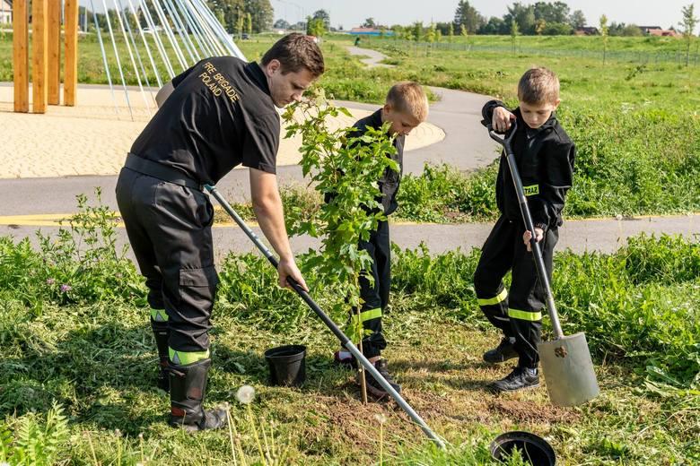 Brzegi – Wieliczka. W Kampusie Miłosierdzia zasadzono 80 drzew pokoju [ZDJĘCIA]
