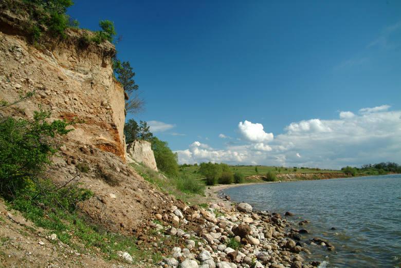 Z wysokich brzegów zbiornika Jeziorsko można dogodnie obserwować ptaki, nie płosząc ich