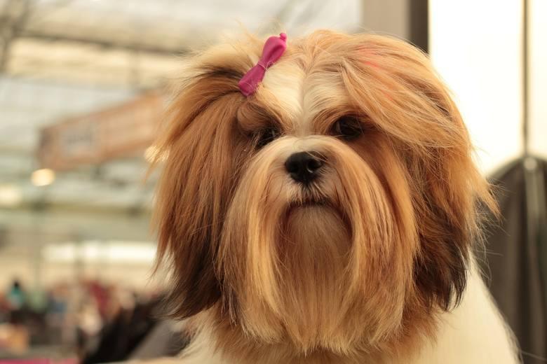Rasy psów, które najtrudniej znoszą samotność. Poznaj pięć ras, które potrzebują kontaktu z człowiekiem. Ich nie zostawisz samych