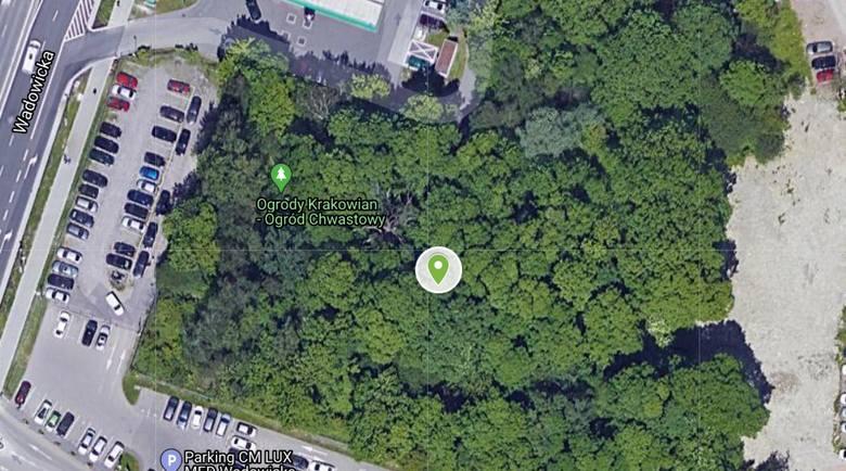 Chwastowy Ogród Krakowian przy ul. Wadowickiej
