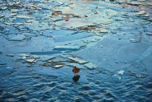 Wielka woda w Nieszawie