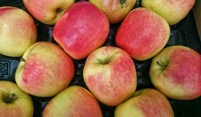 W ciągu jednego dnia rolnicy wyczerpali limit na jabłka i gruszki