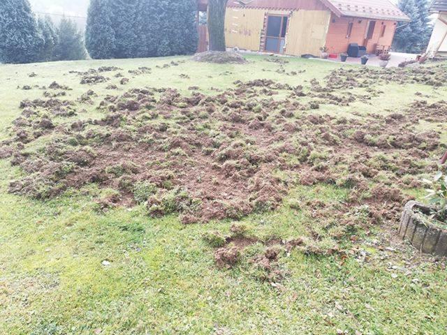Zdjęcia zniszczonego przez dziki trawnika otrzymaliśmy od naszej internautki na Facebooku.- Pierwsza myśl, która przyszła mi do głowy, to to że chyba