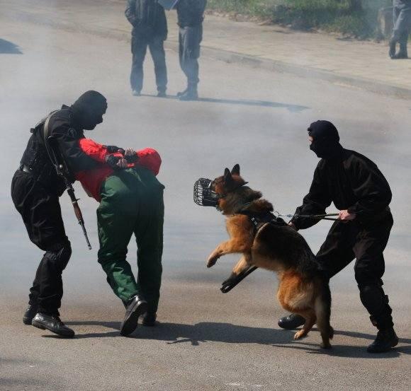 Przed atakiem tak wyszkolonego psa ugiąłby się najgroźniejszy przestępca.