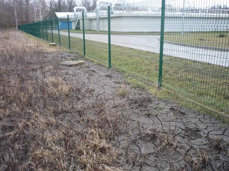 Tak wygląda pole po zalaniu szambem.