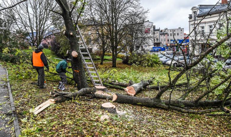 Wycinka drzewa bez zgody właściciela? Posłowie szykują zmiany [projekt noweli ustawy o ochronie przyrody]