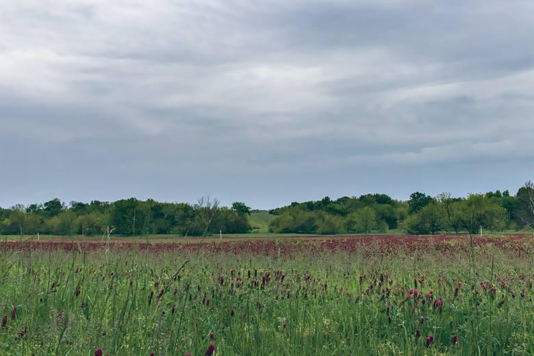 """Chcesz kupić grunt rolny w Lubelskiem? Tych okazji nie możesz przegapić! Kliknij w przycisk """"zobacz galerię"""" iprzesuwaj zdjęcia w prawo - naciśnij strzałkę"""