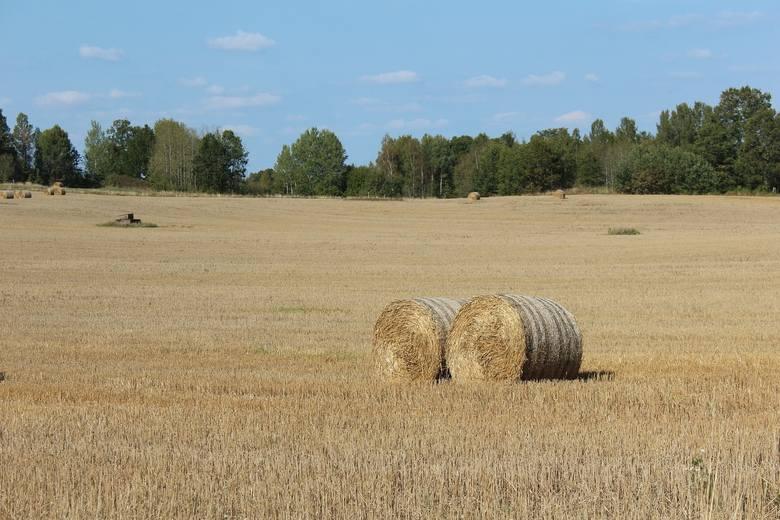 """Być może nieuczciwych """"rolników"""" wyrzuci z interesu ustawa, która weszła w życie w miniony wtorek."""