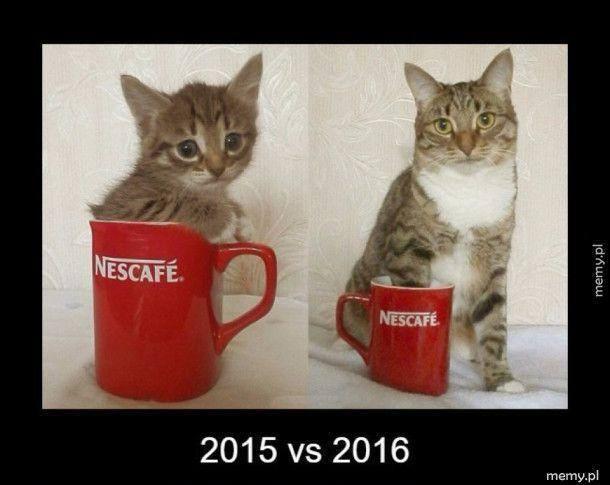 Najlepsze memy i obrazki o kotach. Śmieszne memy z kotami w roli głównej