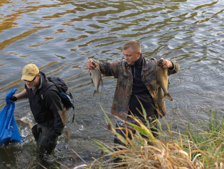 Wędkarze wyławiają z Warty śnięte ryby