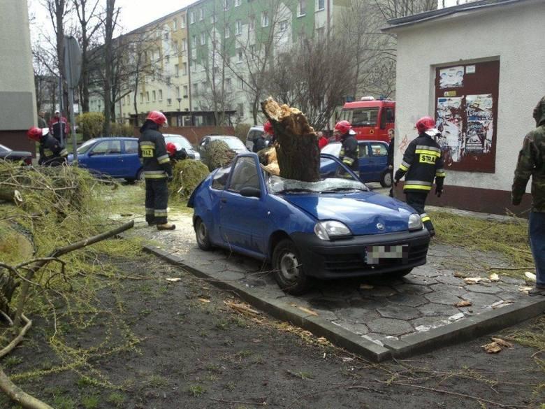 Na ul. Dambonia drzewo runęło na seicento