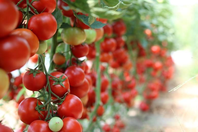 W piramidzie żywieniowej jednym z najważniejszych elementów są warzywa i owoce. Mówi się, że w ciągu dnia powinno spożywać się 4-5 posiłków, oczywiście