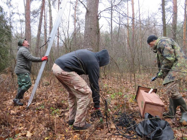 31 budek lęgowych dla puszczyków i puszczyków uralskich społecznicy zawiesili w lasach powiatów leżajskiego, niżańskiego i łańcuckiego.