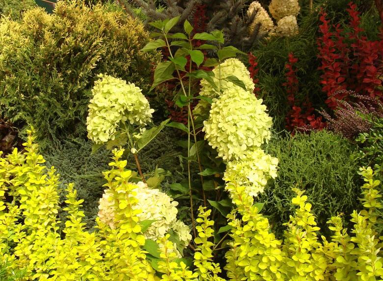 Do uprawy w donicach nadaje się wiele drzewek i krzewów - liściastych, iglastych oraz kwitnących. Zobacz, co warto mieć na balkonie i tarasie.
