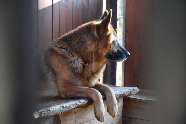 Zima to dla schroniska trudny okres –chłody są bardzo uciążliwe, szczególnie dla starszych psów