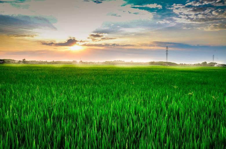 Zmiany w obrocie ziemią 2018 w przygotowaniu. Izba chce zwiększenia swobody sprzedaży do 2 ha