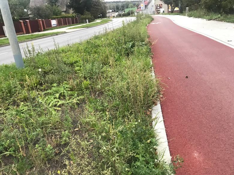 - Od dłuższego czasu instytucja odpowiedzialna za stan zieleni nie jest zainteresowana skoszeniem zieleni wzdłuż pasów drogowych od ul. Zielonej aż do