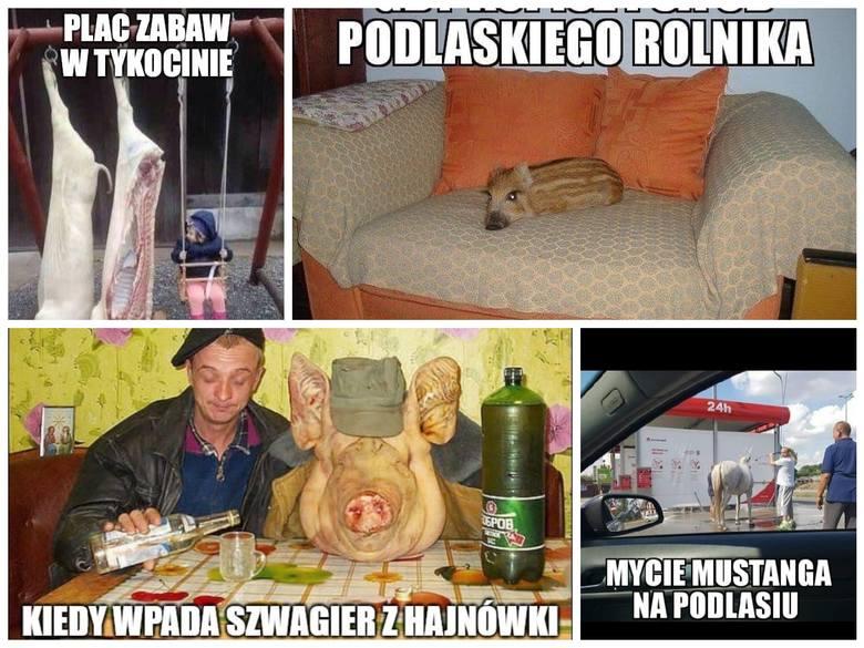 Nowa porcja memów o Podlasiu. Wiesz, jak wygląda podlaski owczarek, podlaska pomoc drogowa albo co zrobić, żeby wyrwać chłopaka z naszego regionu? Przekonaj