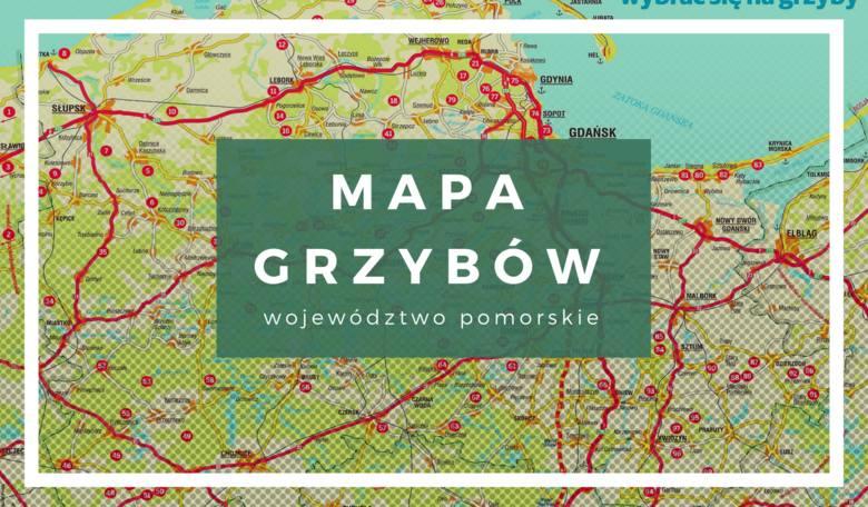 GRZYBY 2019 MAPA. Gdzie są grzyby w lasach woj. pomorskiego?