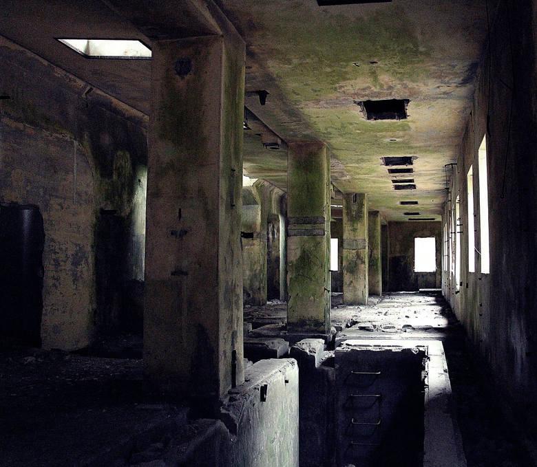 Opuszczone i zapomniane miejsca na Ziemi Lubuskiej. Budzą grozę i ciekawość