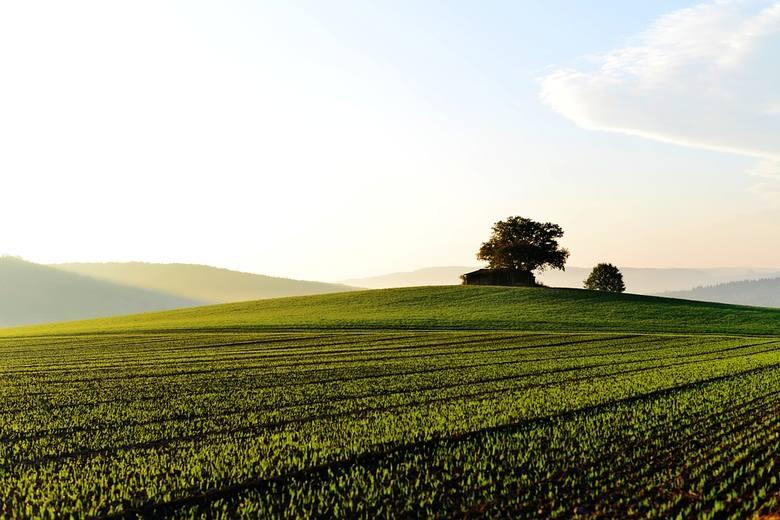 Obwieszczenia o licytacjach, jakie zamieszcza Krajowa Rada Komornicza, to okazja, by poniżej ceny rynkowej kupić między innymi ziemię. Sprawdziliśmy