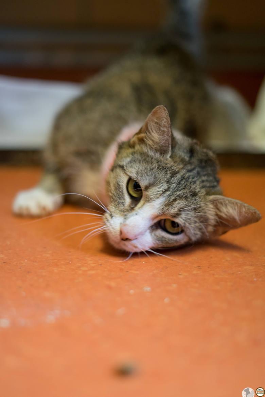 Ranka jest bardzo ufną i delikatną kotką bez cienia agresji.