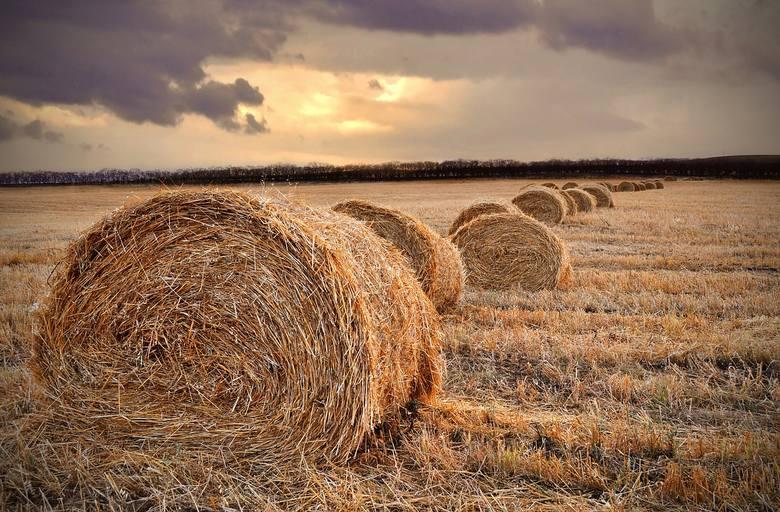 Co z pomocą de minimis dla rolników? Będzie wznowienie po 1 stycznia 2019