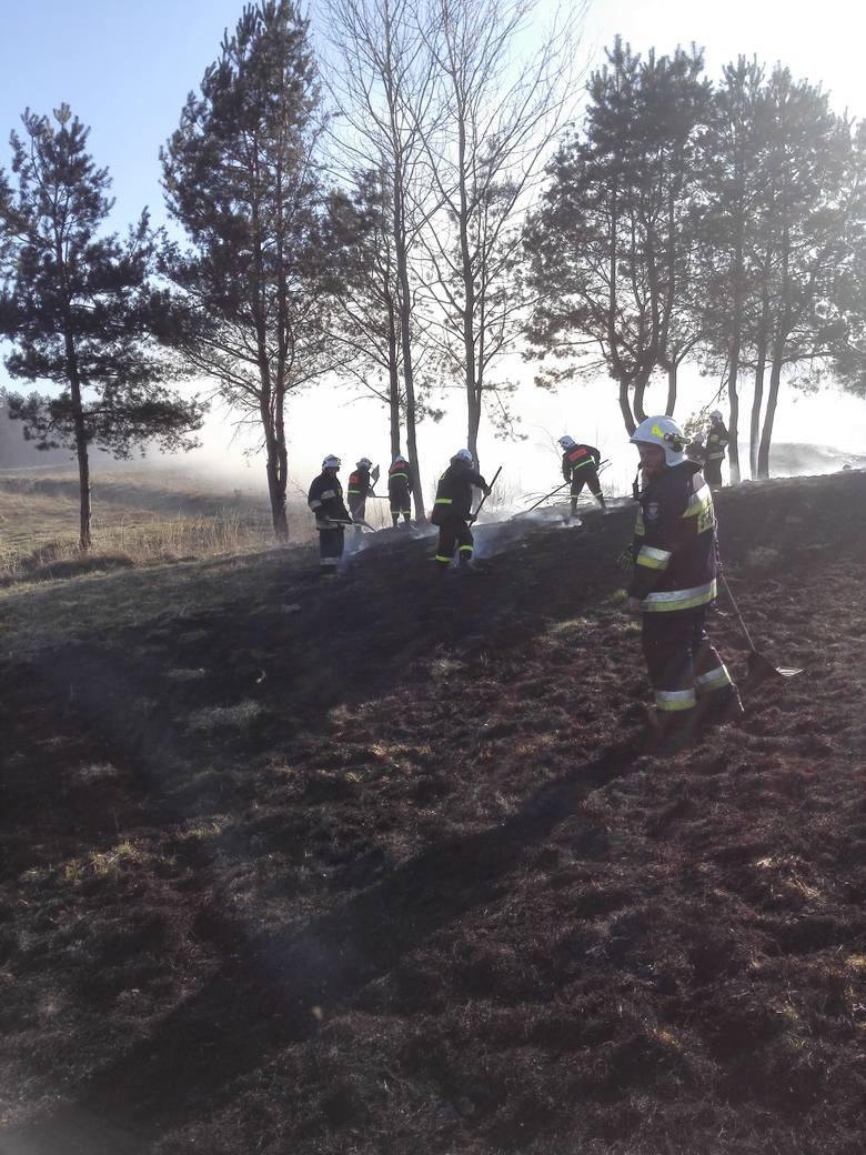 W niedzielę wybuchł pożar lasu w Hucie Brzuskiej koło Birczy w powiecie przemyskim. Z ogniem walczyli strażacy z PSP Przemyśl, OSP Bircza, OSP Sufczyna,