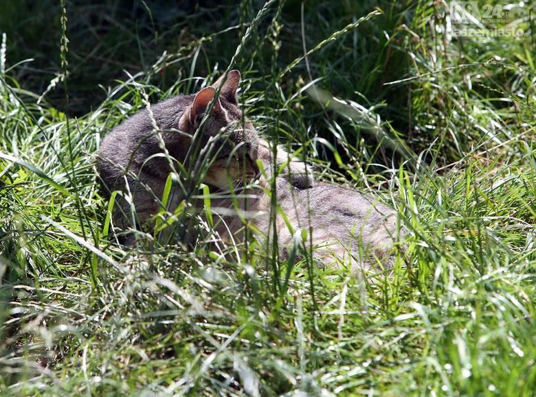 Szczecińskie schronisko pęka w szwach, a zwierząt przybywa