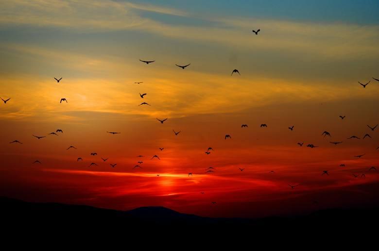 Gdy czerwone słońce wschodzi w marynarzu bojaźń się rodzi. Lecz gdy czerwień o zachodzie, wie marynarz o pogodzieFraza pochodząca z utworu Krzysztofa
