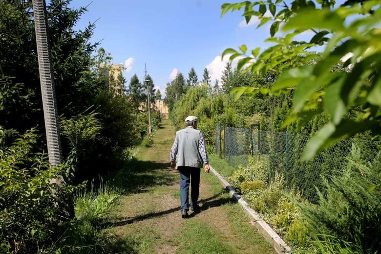 W przypadku likwidacji ROD-u działkowcy dostają odszkodowanie (za krzewy, drzewa, altany), a miasto zapewnia im zastępczy teren pod nowy ogród dział