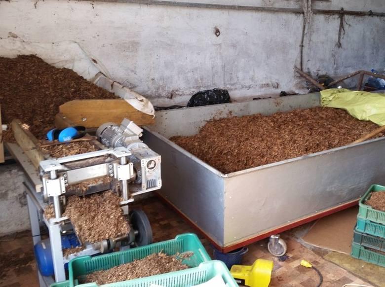 Śledczy szacują, że w wyniku produkcji i sprzedaży nielegalnego tytoniu we Włocławku skarb państwa stracił pół miliona złotych.