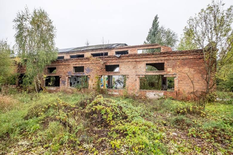 Poznań: Naukowcy sprzeciwiają się zabudowie Szacht. Inaczej stracimy cenne przyrodniczo stawy, które wyschną jak Rezerwat Żurawiniec