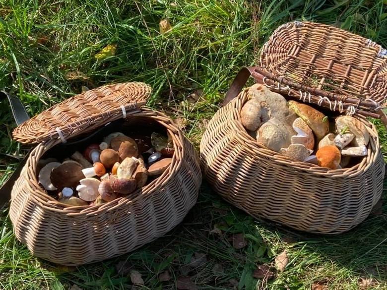 Sezon grzybowy powoli się kończy, ale w weekend 3,4 września zapowiadała się piękna pogoda. W związku z tym w świętokrzyskie lasy wyruszyło wielu grzybiarzy