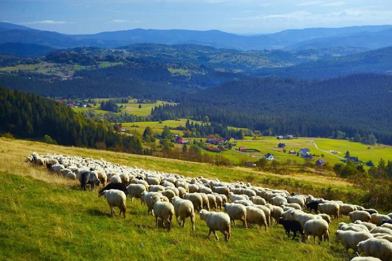 W przypadku turystyki w obrębie województwa śląskiego najczęściej odwiedzano, podobnie jak w latach ubiegłych, tereny wokół Wisły, Ustronia, Istebnej,