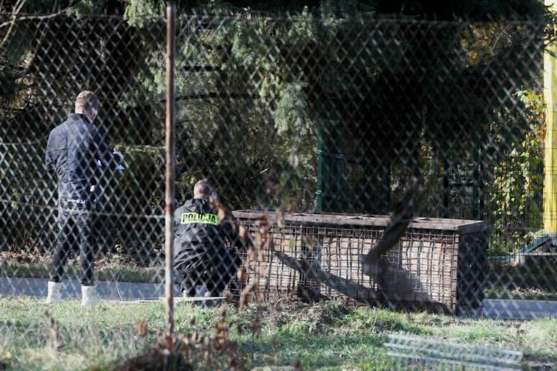 - Antyterroryści strzegą bezpieczeństwa, wszystko przebiega bardzo sprawnie - uspokaja Małgorzata Chodyła, rzeczniczka zoo. Trwa usypianie agresywnego