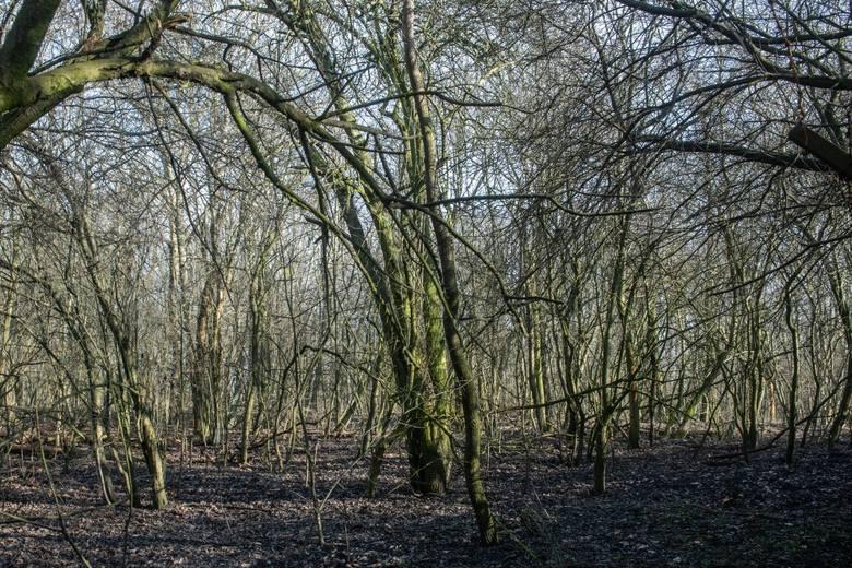 Deweloper twierdzi, że Fort VII a ma szansę stać się ośrodkiem, wokół którego będzie koncentrowało się życie mieszkańców Grunwaldu