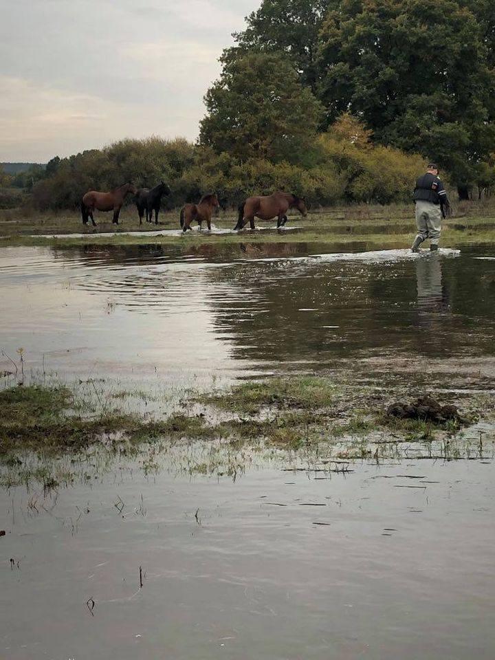 Właściciel koni tłumaczył, że nie spodziewał się takiego wzrostu wody.