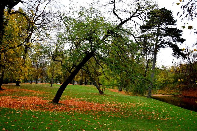 Złota polska jesień w skierniewickim parku [ZDJĘCIA]