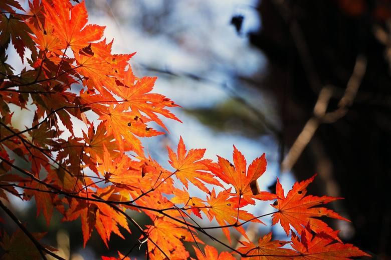 Pogoda na wtorek, 8 października. Chłodno i deszczowo