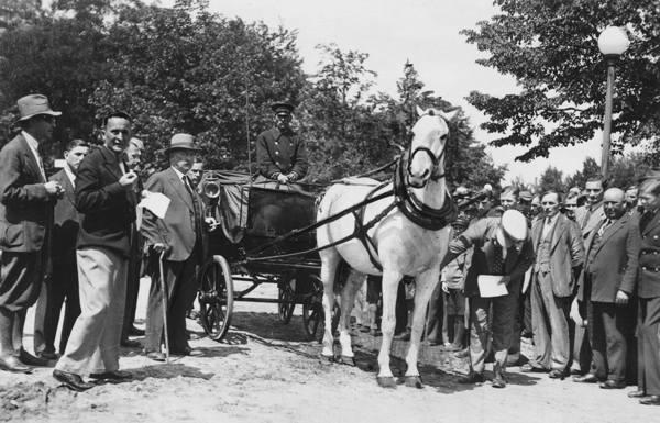 Dorożka z najlepiej utrzymanym koniem podczas ostatnich oględzin inspektorów Towarzystwa. Lipiec 1934 r.