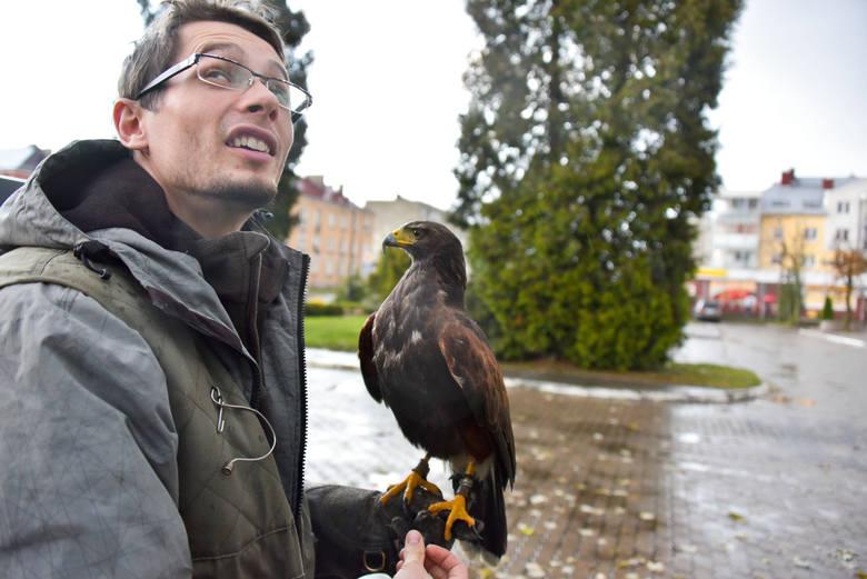 Grzegorz Paluchowski z Wandą, która ma za zadanie przepłoszyć  gawrony i kawki z Wysokiego Mazowieckiego.