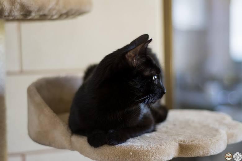 Drobinka to kotka, będąca prawdziwym wulkanem energii. Ma potrzebę ruchu, świetny instynkt łowiecki. Kocha wszelkiego rodzaju pieszczoty. Czasem bywa nieco płochliwa.