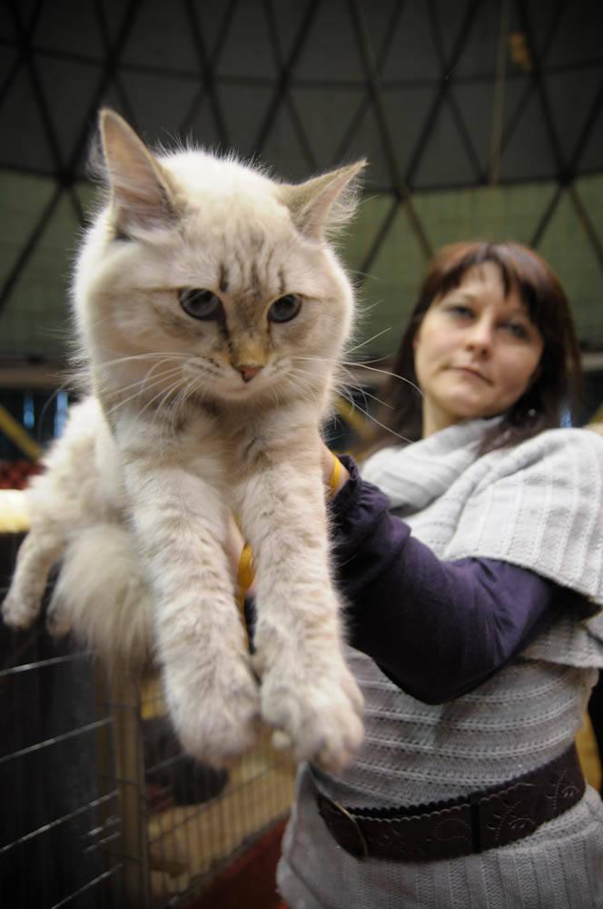 Wystawa kotów w Opolu w opolskim okrąglaku