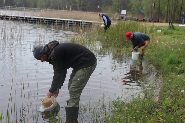 Tysiące pstrągów i szczupaków trafiło do rzek i jezior (zdjęcia)
