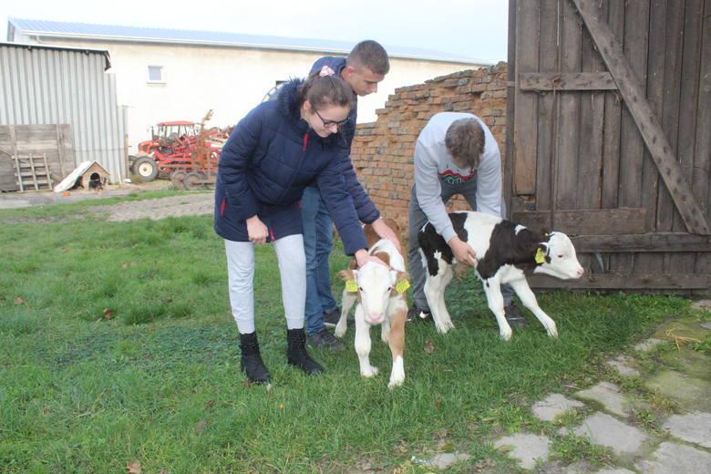 W gospodarstwie rolnym Joanny i Adama Gralaków w Bieganowie w gminie Radziejów specjalizującym się w hodowli bydła mlecznego po raz drugi w historii