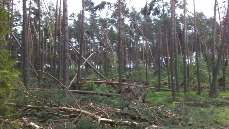Burze na Śląsku: Olbrzymie szkody w nadleśnictwach RDLP w Katowicach